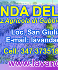 Lavanda della Tuscia Azienda Agricola Biologica di Gubbiotti Lucia